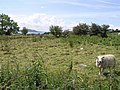 Cockhill Townland - geograph.org.uk - 1368428.jpg