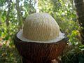 Coconut pong open.JPG