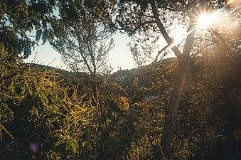 Collserola view.jpg