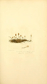 Coloured Figures of English Fungi or Mushrooms - t. 84.png