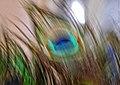 Coloured flame (36113796634).jpg