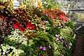 Conservatory potted plants Capel Manor Gardens Enfield London England 2.jpg