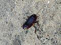 Cool Bug - Flickr - GregTheBusker.jpg