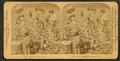 Cotton is king - A plantation scene, Georgia, by Strohmeyer & Wyman 4.png