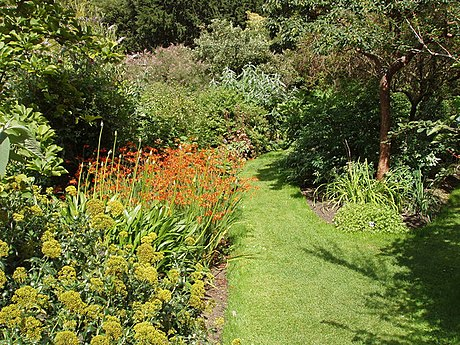 The Chelsea Physic Garden has cultivated medicinal plants since 1673. The plant shown here is montbretia (crocosmia aurea), used as a remedy for dysentery.