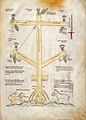 Cross-Tree of Life Wellcome L0029362.jpg