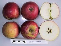 Cross section of Chad's Favourite, National Fruit Collection (acc. 1962-022).jpg