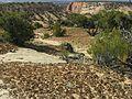 Cryptobiotic soil crusts - Flickr - pellaea (1).jpg