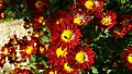 Culoarea dragostei de natura - panoramio.jpg