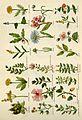 Culpeper's complete herbal BHL4747049.jpg