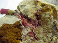 Cuprite, variety Chalcotrichite - USGS Mineral Specimens 455.jpg