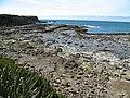 Curio Bay - 180 mil. let starý les - panoramio.jpg
