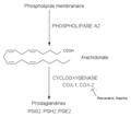Cyclooxygenase.png
