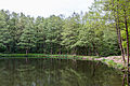 Dülmen, Naturschutzgebiet -Franzosenbach- -- 2014 -- 0040.jpg