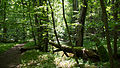 D08 Tiefental Königsbrück Naturschutzgebiet (12).jpg