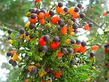 Tree branches bearing masses of red and black fruit