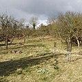 Daffurn's Orchard, Kemerton - geograph.org.uk - 131244.jpg