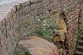 Daucus gummifer-6196.jpg