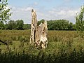 Dead tree trunk - geograph.org.uk - 872005.jpg