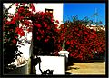 December Colors Haria - Master Lanzarote Photography 1988 - panoramio.jpg