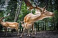 Deer (222704829).jpeg