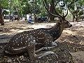 Deer 10.jpg