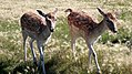 Deer Meadow Farms Corn Maze, Deacon Rd, Birds Hill (502017) (16362900261).jpg