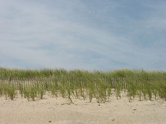 Delaware Seashore State Park - Image: Delaware Beaches State Park