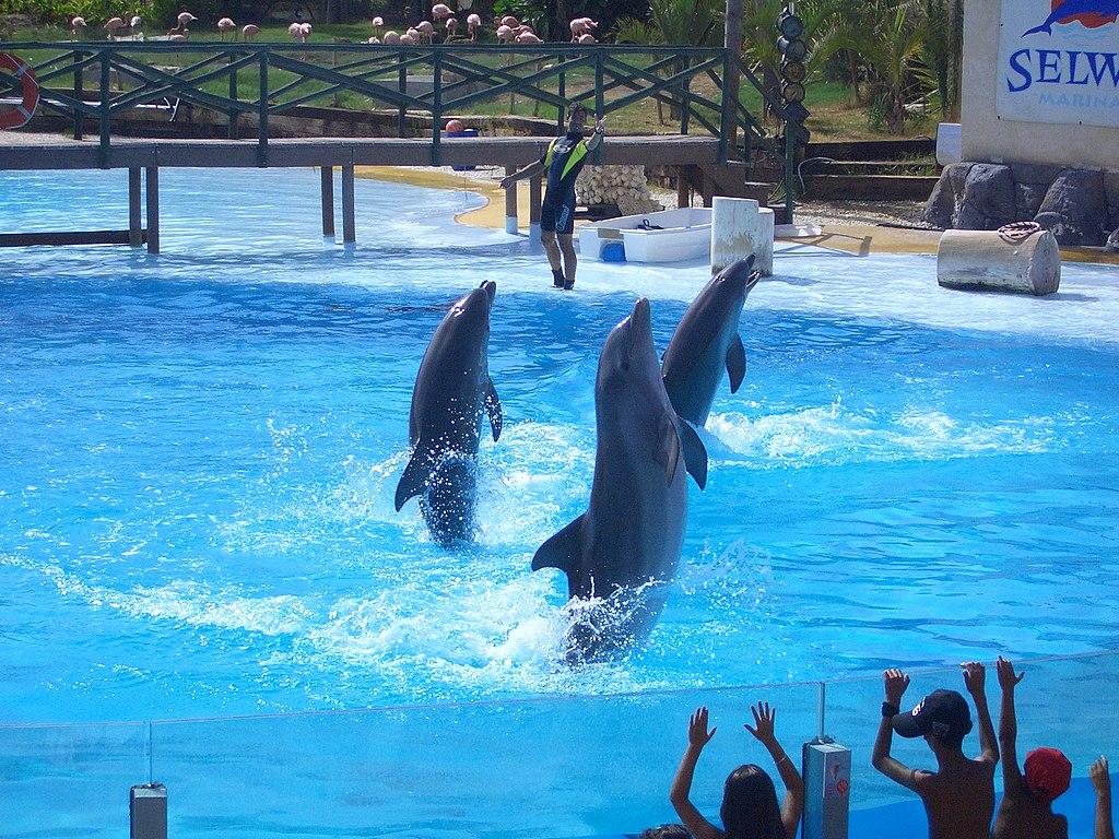 Dolphins in Selwo Marina, Benalmádena, Málaga, Spain
