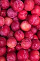 Delicious Plums (4526452842).jpg