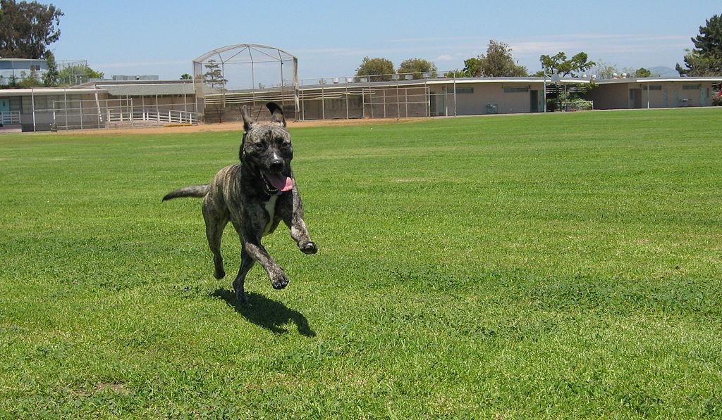Dog Friendly San Diego Rentals