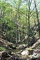 Dolina rečice Perast 22.jpg