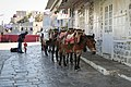 Donkeys at the Port. Hydra, Greece (9668859808).jpg