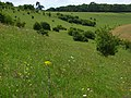 Downland, Great Wishford - geograph.org.uk - 484557.jpg