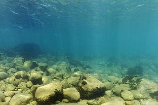 Vodný ekosystém