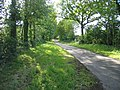 Driveway to Grove Park - geograph.org.uk - 156279.jpg