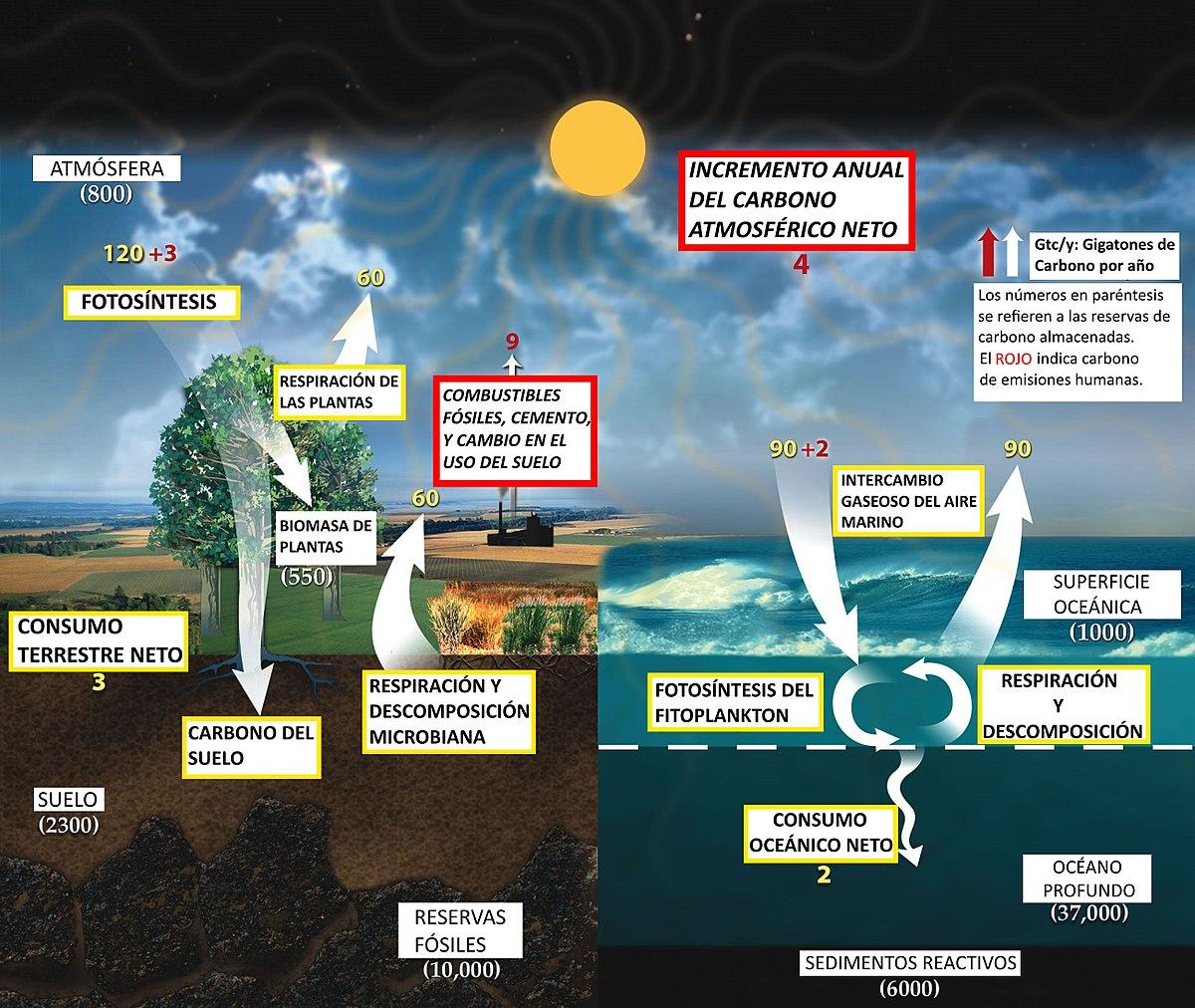 Ciclo del carbono - Wikipedia, la enciclopedia libre