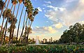 Echo park lake with lotus flowers and Los Angeles skyline in the background.jpg
