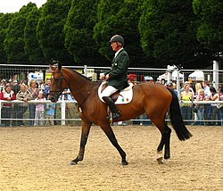 Eddie Macken and Tedechine Sept - Dublin (Irl) CSIO***** 2008.jpg