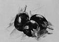 Eggplants MET sf 1974.356.3.jpg