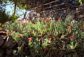 Eilat Botanical garden 6.jpg