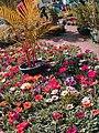 El Zohour Showroomمعرض الزهور بحديقة الاورمان 9.jpg