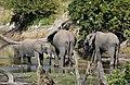 Elephant, Ruaha National Park (37) (28440130320).jpg