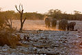 Elephant Family coming to Okaukuejo waterhole (3687259657).jpg