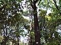 Empress Botanical Garden Pune 8.jpg