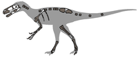 Eotyrannus remains 01.png