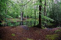 Epping Forest High Beach Essex England - spring pond 01.jpg