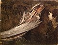 Erik Bodom - Decaying Trunk. Copy after Cappelen, NG.M.00289-5 - NG.M.02685 - National Museum of Art, Architecture and Design.jpg