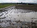 Erosion Verdichtung021.JPG