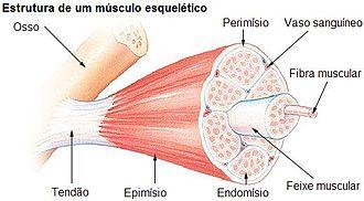 relaxante muscular em ingles